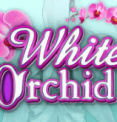 Автомат White Orchid
